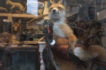 Taxidermy Fox carrying pheasant
